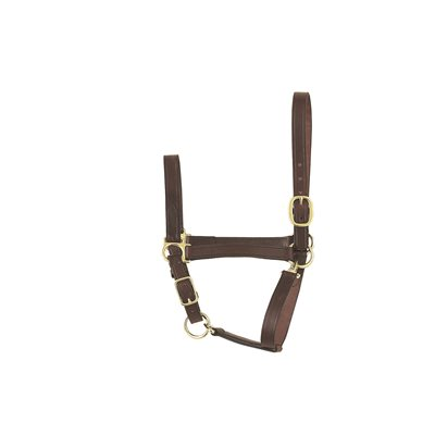 ECONOMY YEARLING HAVANA HALTER
