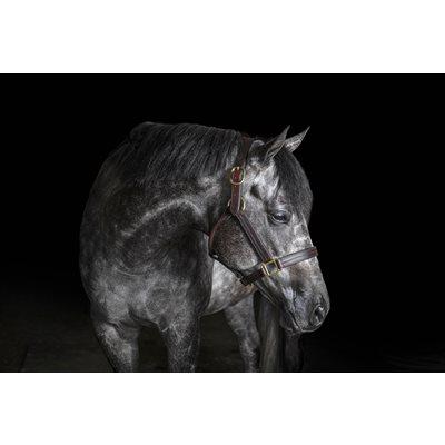HEAVY DUTY HORSE TRACK HALTER W / SNAP