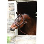 PONY HAVANA / BROWN PADDED HALTER