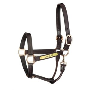 HAVANA HORSE PREMIUM TRACK W / SNAP HALTER W / PLATE