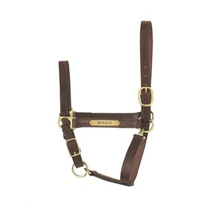 ECONOMY LEATHER HALTER W / PLATE